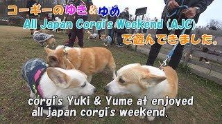 コーギーのゆき&ゆめ、All Japan Corgi's Weekend (AJC) に行って来ま...