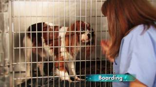 Boarding - Pelham Alabama Animal Hospital - North Shelby County Animal Hospital