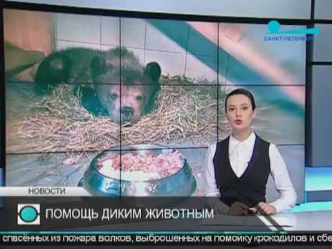 Смотреть Телеканал Санкт-Петербург онлайн