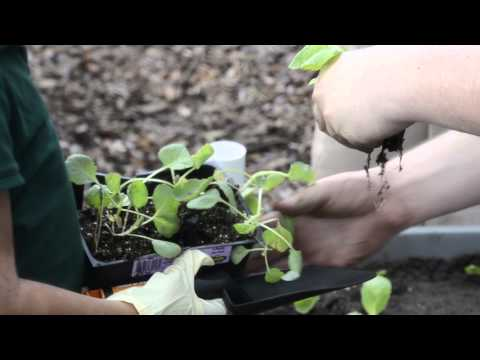 USF Med. Students Help Plant Seeds for Healthier Tomorrow