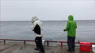 fishingmax武庫川 鳴尾公園でハネ thumbnail