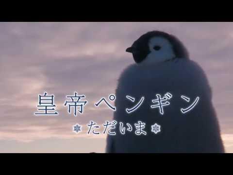 映画『皇帝ペンギン ただいま』予告編(ショートバージョン)