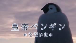 第78回アカデミー賞長編ドキュメンタリー賞受賞作『皇帝ペンギン』の続...