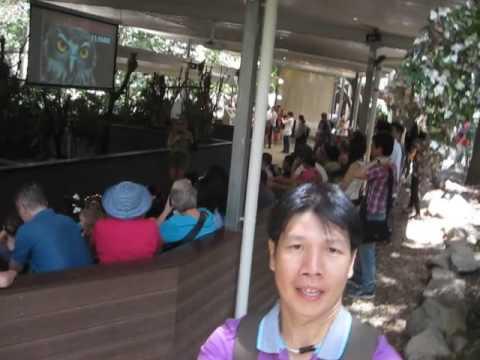Brisbane Lone Pine Koala Sanctuary 4