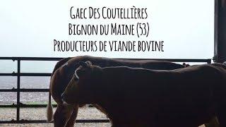 Mickael CHAUVEAU (Producteur de Viande bovine) - Eleveur Ambassadeur Bleu-Blanc-Cœur
