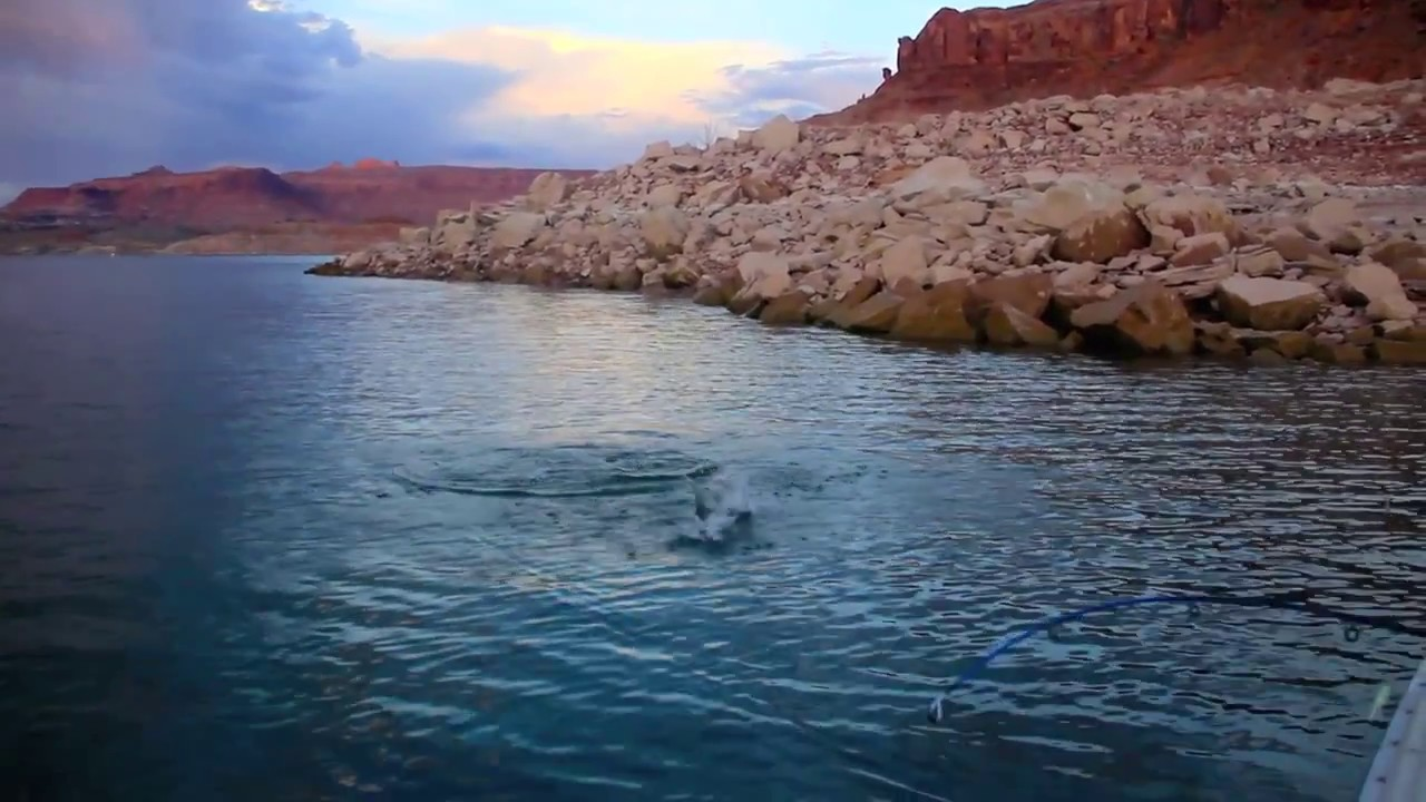 Lake powell august 2013 pt 2 youtube for Lake powell florida fishing