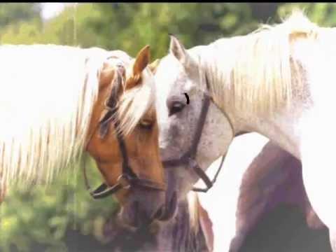 Fotos de caballos hermosos para facebook 72