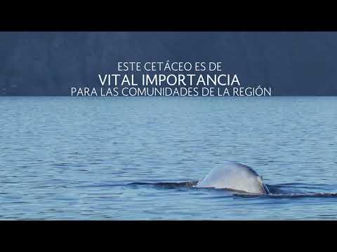 La ballena azul llega a Bahía de Loreto, Baja California Sur