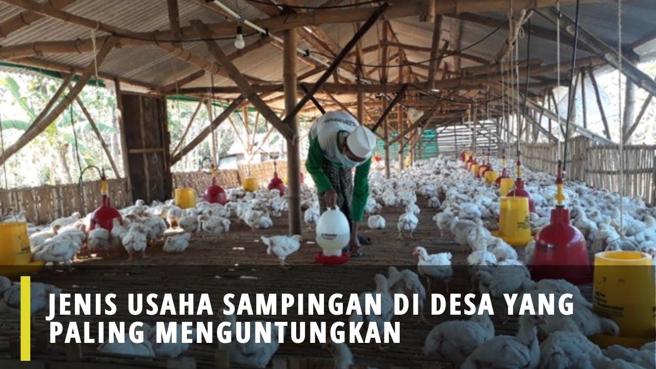 Jenis Usaha Sampingan Di Desa Yang Paling Menguntungkan ...