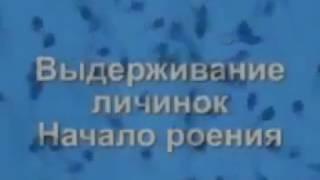 Оборудование для выращивания рыбы в Узв ПОСТРОЙКА СИСТЕМ УЗВ(магазин живой рыбы ****Новогодние предложение 2017*** aquarai.net +38093-00-00341 Компания АкваРай:) проводит новогодние..., 2015-10-18T15:03:41.000Z)