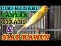 Ciri Dan Tanda Kenari Jantan Birahi Siap Kawin  Mp3 - Mp4 Download