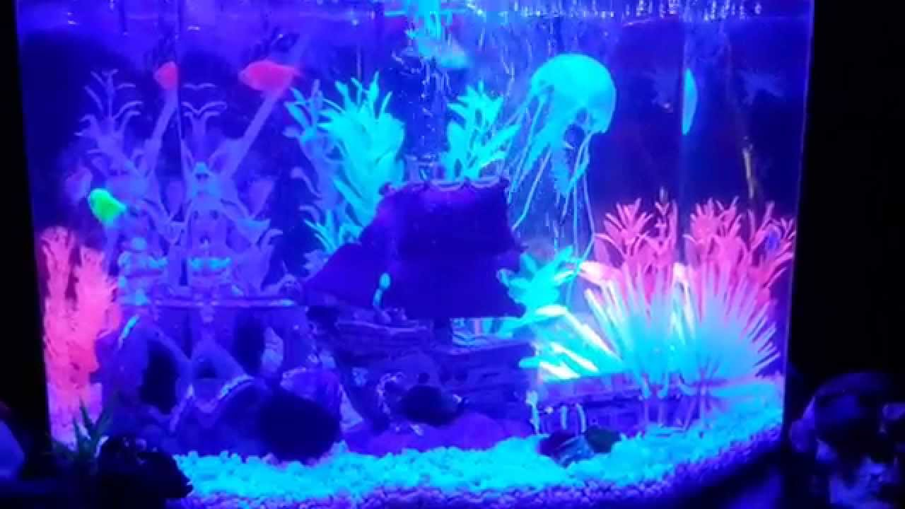 my 65 gallon glofish aquarium youtube