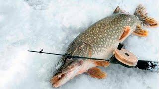 Удачная зимняя рыбалка 2012года