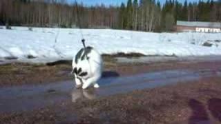 Misse Perdita walk on water
