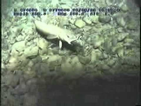 Life on board for ROV personnel.WMV