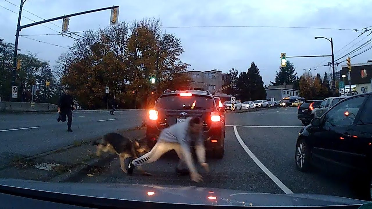 Download Vancouver Police K9 Takedown Caught on Dashcam - October 30, 2018