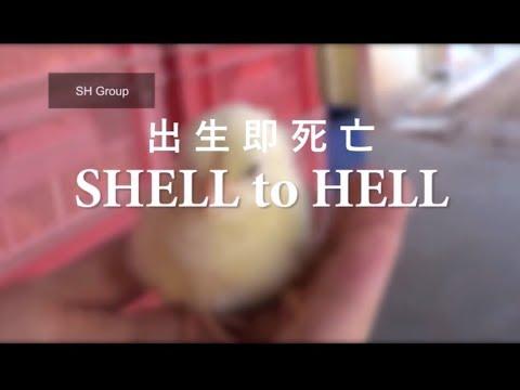 出生即死亡:殘忍的雞蛋產業 SHELL to HELL: Horrors of the Egg Industry