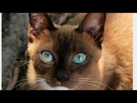 UNUSUAL AND UNIQUE CAT BREEDS