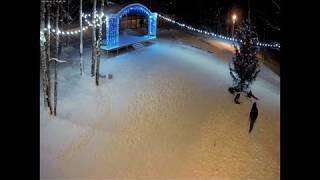 Собаки погрызли новогоднюю ёлку - 13.01.19