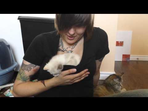 Boob Kitten 105