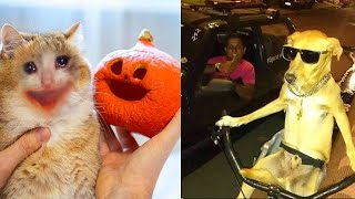 BEST CAT AND DOG MEMES COMPILATION OF 2020 PART 31 (FUNNY PET MEMES)