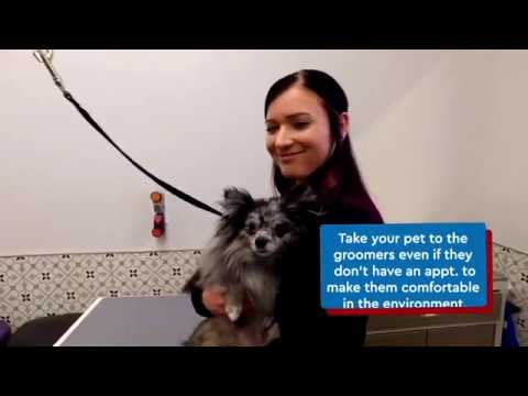 Exceptional Pets Grooming Tips