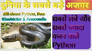 All about Python || All about Python, Boa Contrictor & Anaconda || World's Longest Python ever