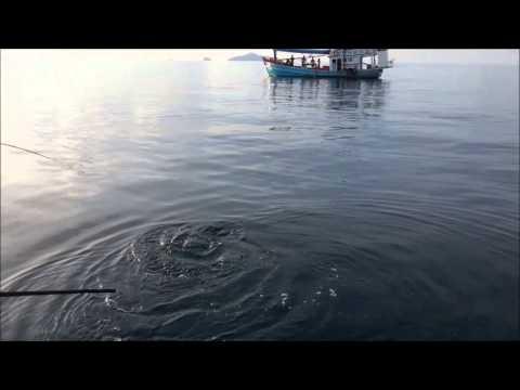 ช่อนทะเล เรือไต๋แก้ว by ชุมชนนักตกปลา จันทบุรี
