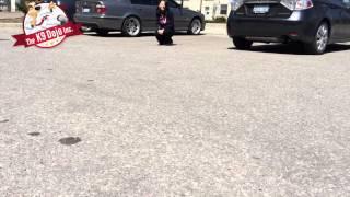 Siberian Husky Attacks