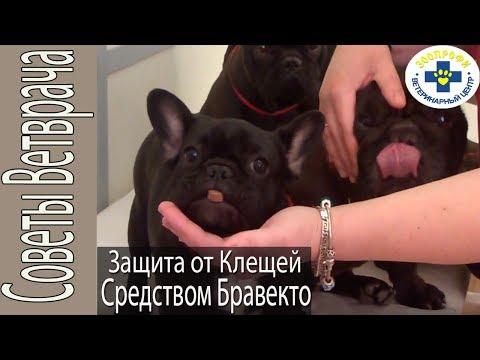 Заболевания собак, передающиеся клещами