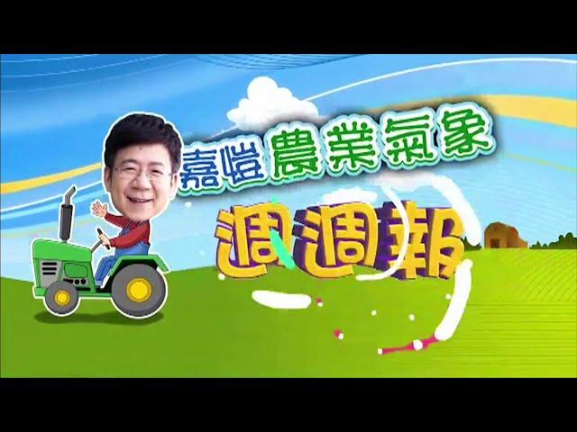 2020.10.19─嘉愷農業氣象週週報