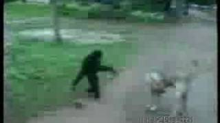 Monkey Funny Video   Download for Free on Mobango com