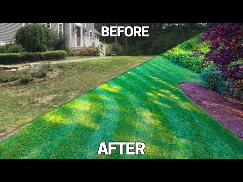 Fix an Ugly Lawn 5 TIPS -Easy Step by Step Guide For Beginners