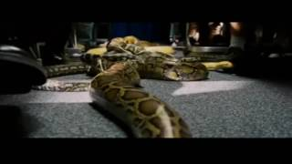 Download Video Snakes on Plane - Epic MP3 3GP MP4
