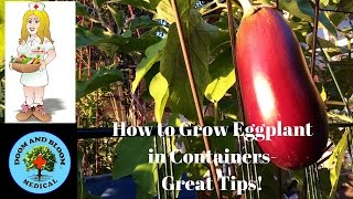 How to Grow Eggplant in Containers: Great Tips!
