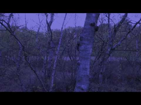 MYRKUR - Två Kongunbarn (Official Audio)