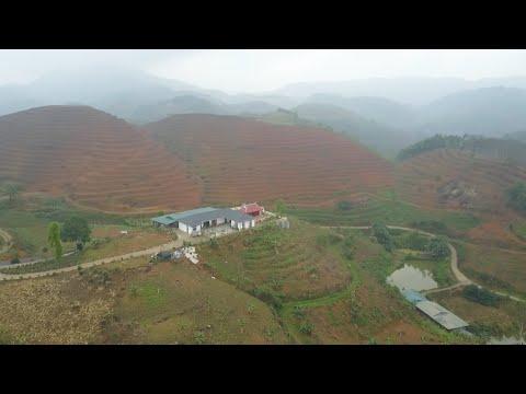 Lào Cai: Ngang nhiên xây nhà trên đất rừng   VTC14
