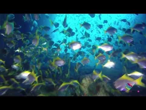 Grey Nurse Sharks Encounter Fish Rock Cave  Fish Rock Island  South West Rocks NSW Australia