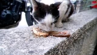Кормление котов в Греции. Кефалония