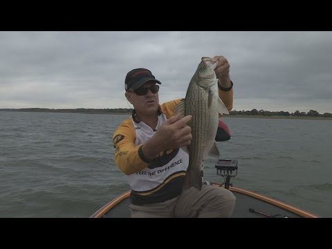 Southwest Outdoors Report #35 Lake Lewisville, Texas Hybrid Striper Fishing - 2013