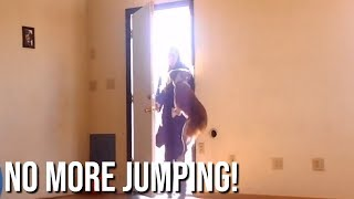 How to Cure Your Dog's Jumping Problem