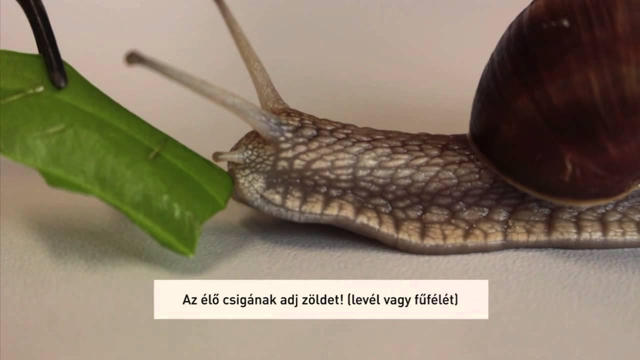 májriadó amit eszik)