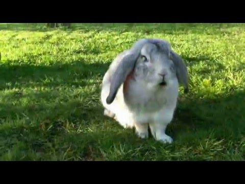 Here Comes Peter Cottontail (Easter Music)