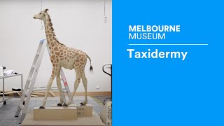Discover Documentary #1 | Taxidermy