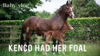 BABY HORSE VLOG | KENCO HAD HER FOAL 💕