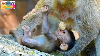 Cute activity Jilla baby happy play with mom take care from Popeye & Dee Dee | Monkey Daily 5010
