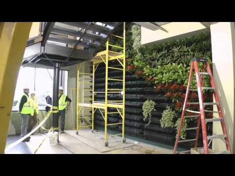 Wall of Life Natural Factors Botanical Designs Seattle, WA