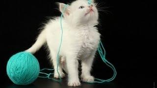Игра Кошки Мышки. Реальное Видео - 6