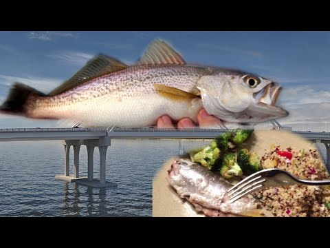 Catch And Cook: White Trout!