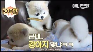 다들 모여주세요 이 강아지에 대해 할말 있음ㅣDo you see the animal in the photo as a dog? Mong is not a dog.. She is..